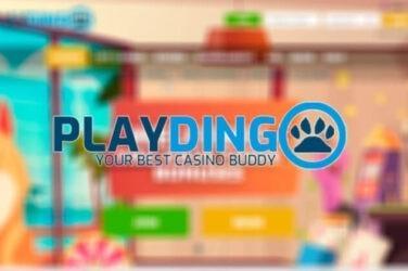 playdingo bonus